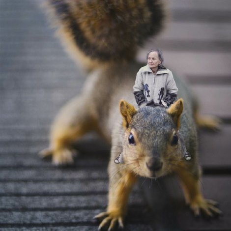 tdy-130603-zev-hoover-squirrel-woman.ss_full